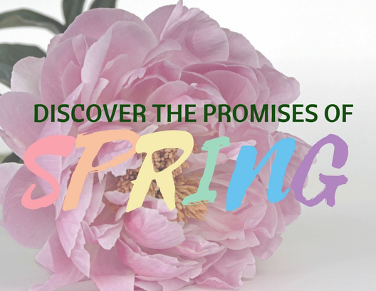 Discover the Promises of Spring